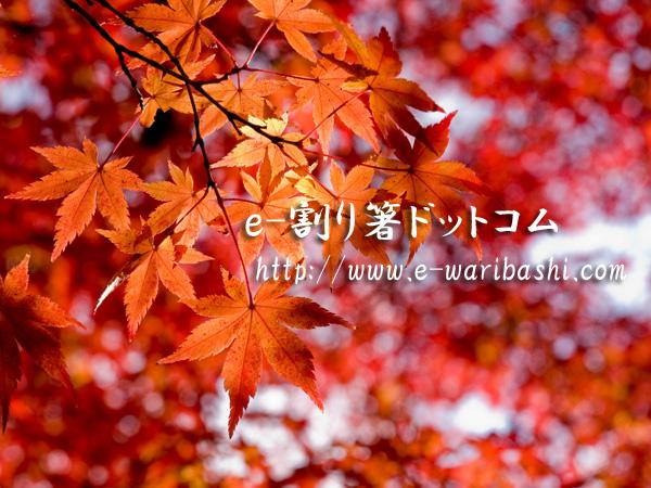 e-割り箸ブログ
