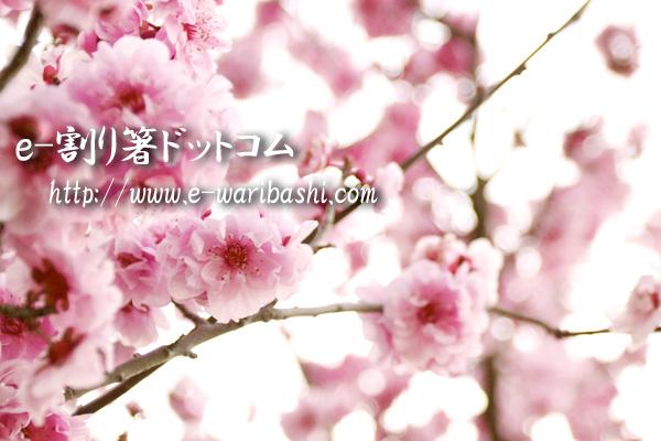 e割り箸ドットコム3月ブログ
